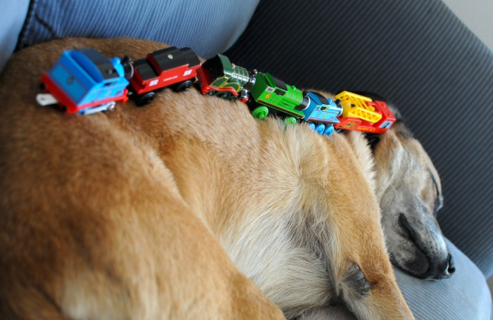 dog asleep with train