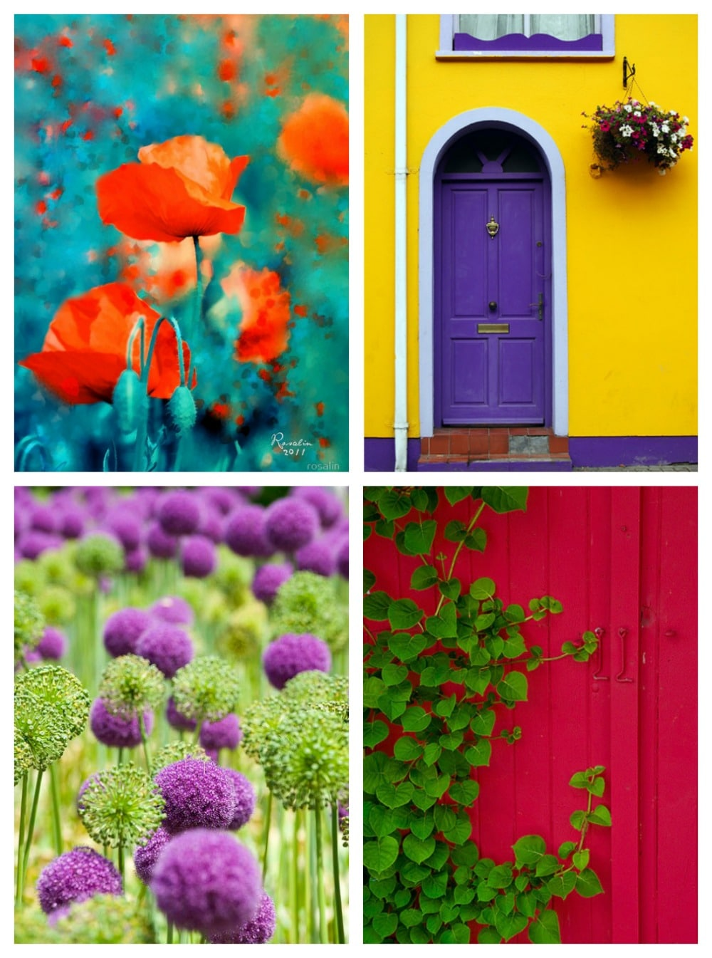 complementary colors!