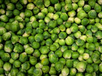 a sea of brussels sprouts
